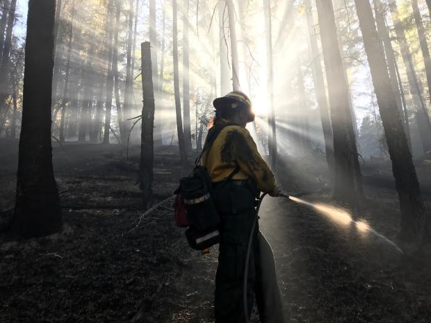 A firefighter is backlit by the sun streaming through the trees is shown with a hose streaming water.