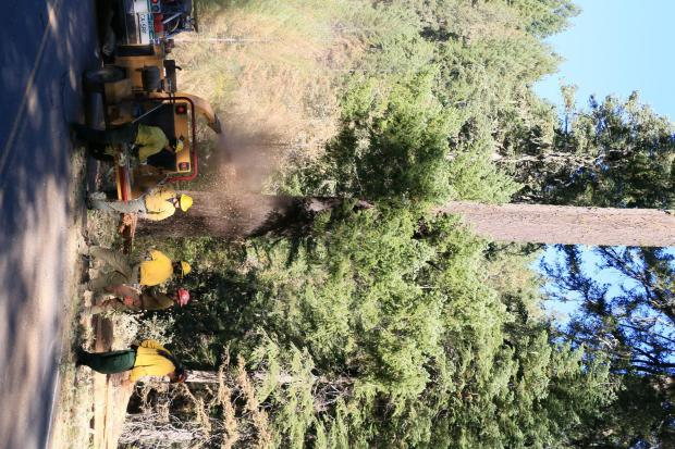 Picture shows firefighters chipping woody debris along a road.
