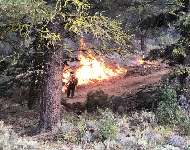 Firing operations in Division E on the W-5 Cold Springs fire.