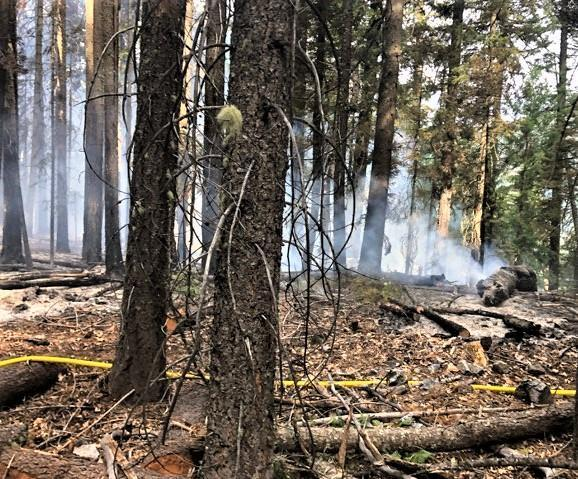 Image of South Fire burning stumps in the forest 8/18/2020