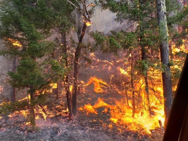 image of Hopkins Fire fire in the trees 9.9.20 near Mad River Ranger District