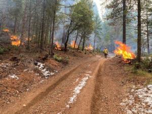 These prescribed burn piles are part of the Potato 2 project area south of Hayfork (photo by K. Rohrs)