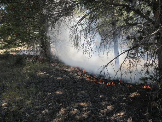 Fire burning ground fuels -  smoke output
