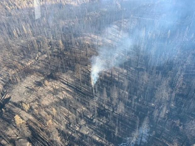 A giant sequoia tree smoldering interior on the Castle Fire