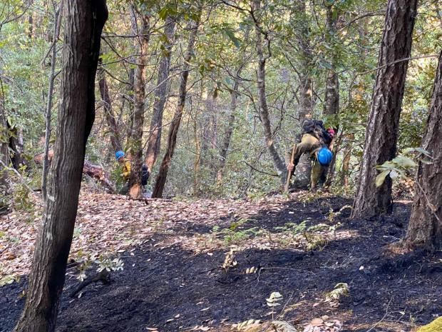 Two firefighters stand in the distance under trees checking the forest floor for hot spots.