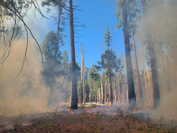 A pine-type forest is shrouded in light smoke with low-intensity fire on the ground.