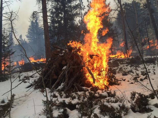 Bright orange flames from a burning slash pile in the forest