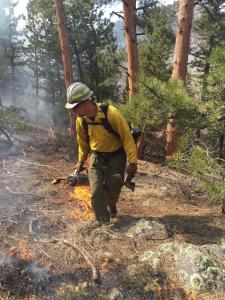 Firefighter in yellow shirt drops orange flames on forest floor from a drip torch