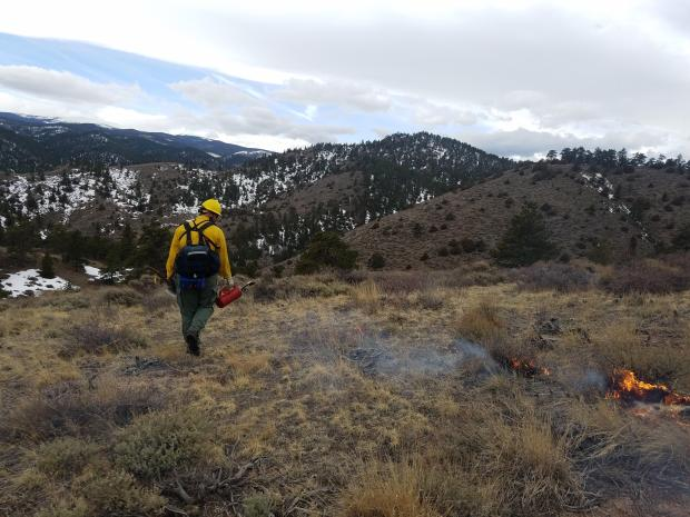 A firefighter with a red hard hat and yellow nomex shirt uses a drip torch to put fire on the ground with a snowy mountain backdrop.