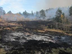 Blackened ground following previous burning at the Pingree HIll Prescribed Burn.