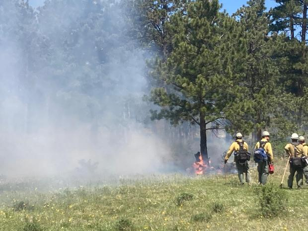 Ground fire in green vegetation within the forest with smoke