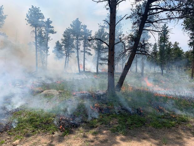 Ground fire in green vegitation within the forest with smoke