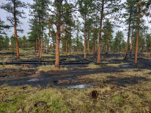 Completed Rx burn with black charring on tree bark and low intensity ground fire blackening