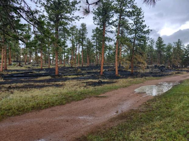 Completed Rx burn with black charring on tree bark and low intensity ground fire blackening. Puddling from recent rains.
