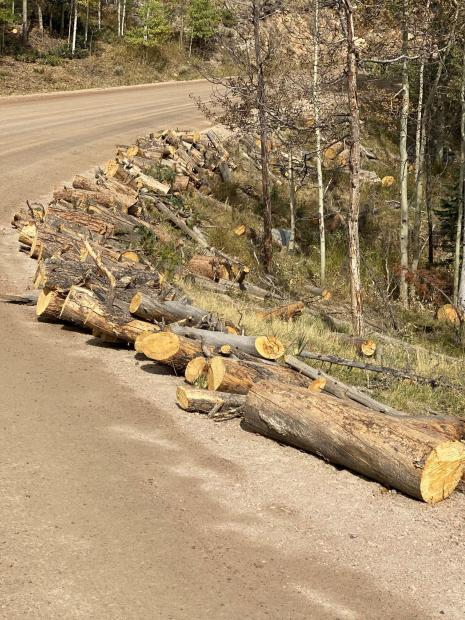 Logs cut along Manhattan Road and ready to stack