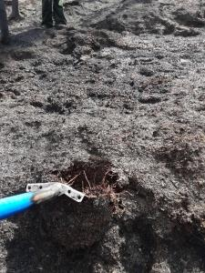 Blackened dirt with a blue handled shovel.