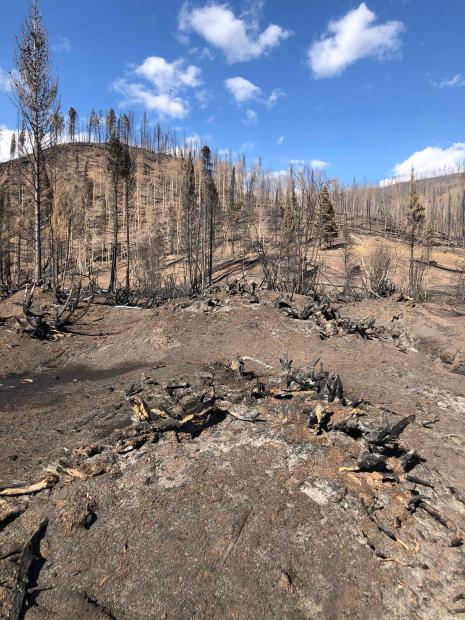 Image of burned area
