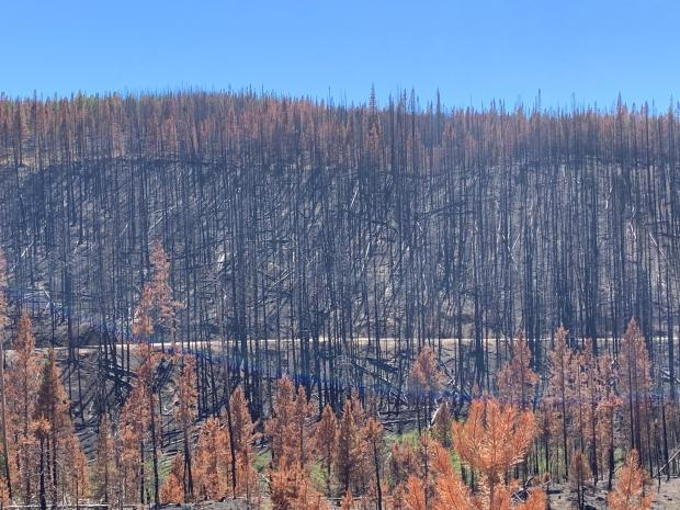 Burned area shows a mosaic burn pattern, with varying levels of severity.