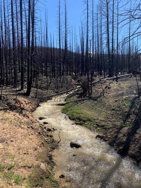 Wildfire impacts on waterways can include downed trees, high sediment loads, changed scenery.