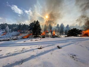 Multiple piles of brush are burning among a sparse evergreen forest. The ground is covered with a thick blanket of snow.
