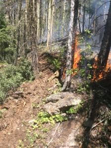 Flames rise from the ground at the base of trees. A line of soil acting as a control line is adjacent to the fire.