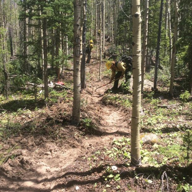 Three firefighters scrape ground vegetation to expose mineral soils. The line is constructed through the trees.