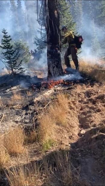 Firefighter falls a hazard tree on Middle Fork Fire