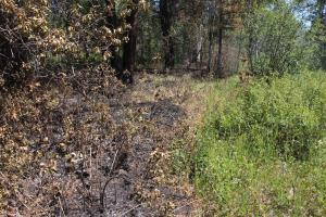 A burned area of forest, side by side with a green unburned area.