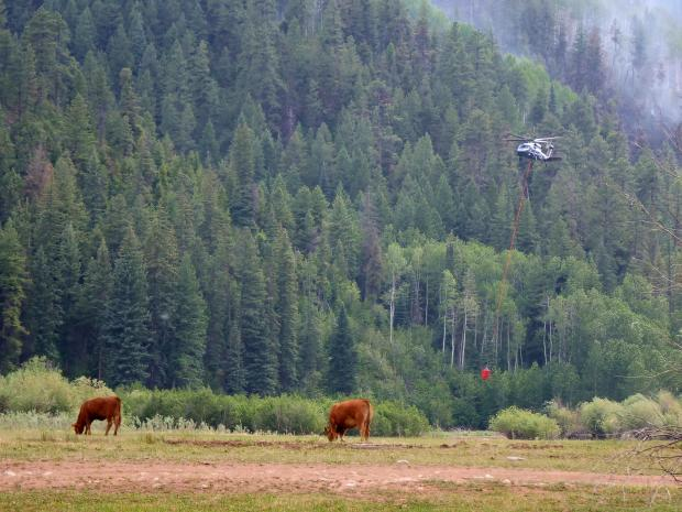 A helicopter prepares to fill its water bucket as cows graze nearby. The Loading Pen Fire is in the background, upper right.
