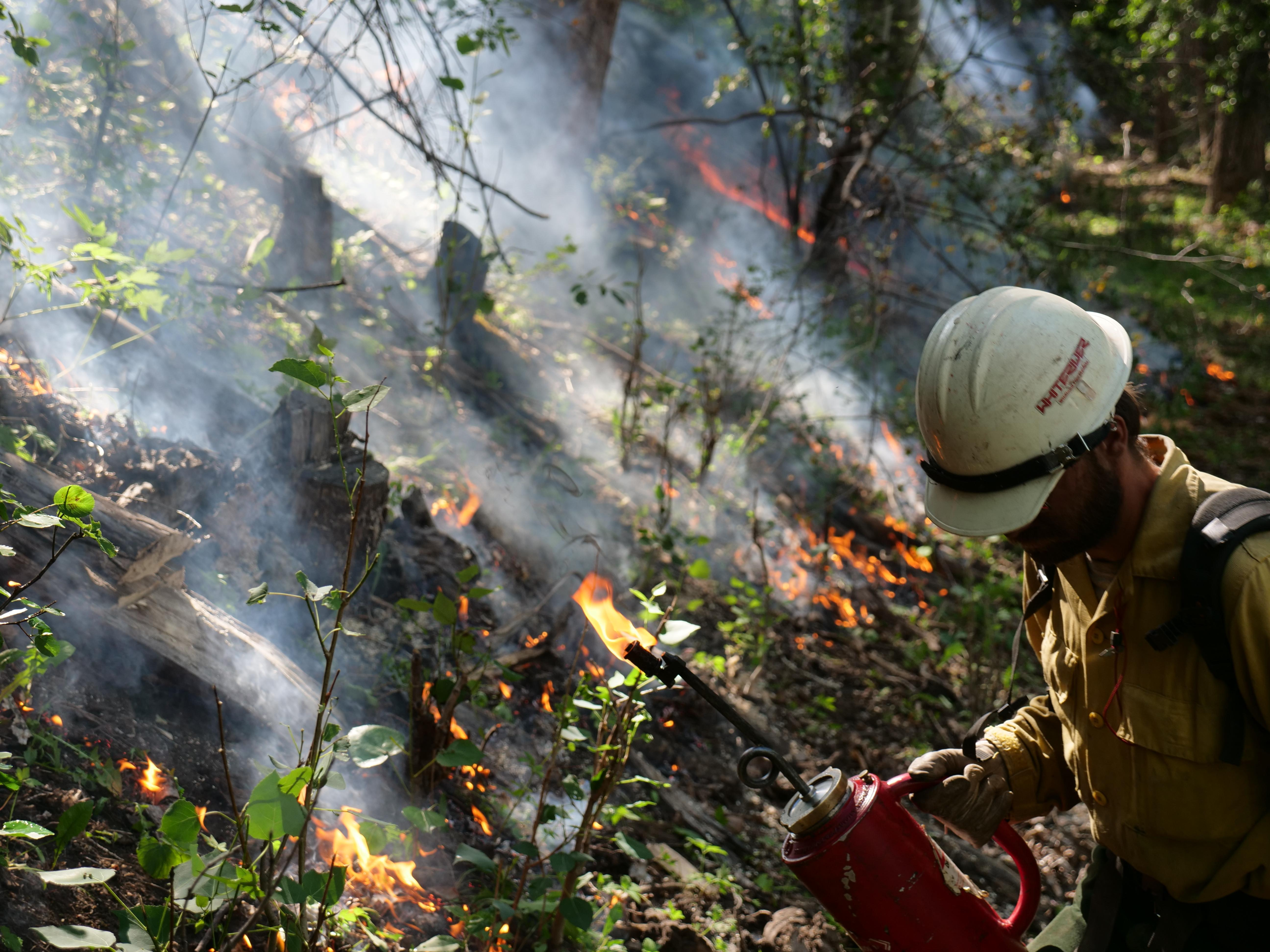 A firefighter holding a drip torch at the Loading Pen Fire.