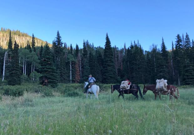A man on horseback leads two pack horses through a meadow with mountains in the background.