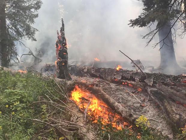 Fire activity in dead and down fuels