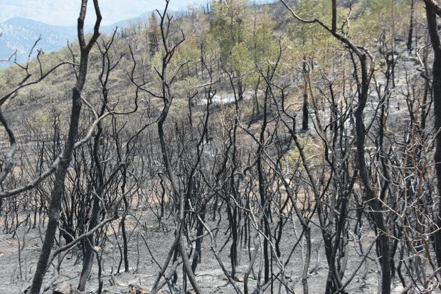 Grizzly Creek Fire burned vegetation