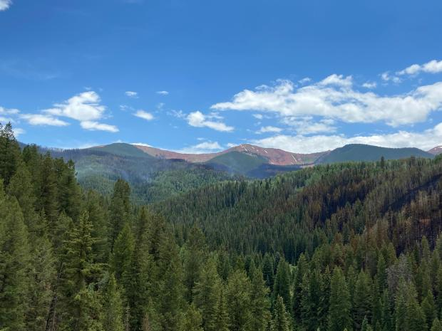 Many unburned trees with burned trees at right side of image