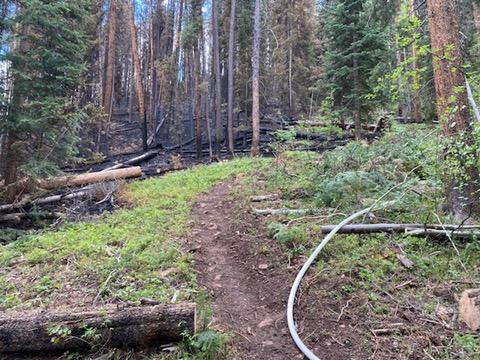 firehose on a fireline with burned trees on left side of line