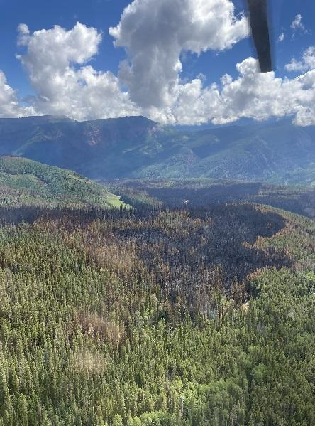 burned and unburned trees viewed from helicopter