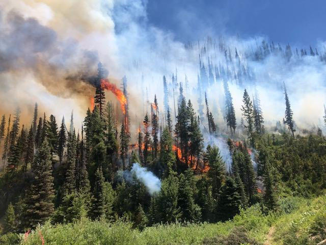 Canyon Fire Information - InciWeb the Incident Information