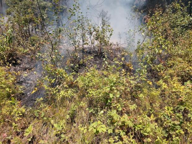 Image showing a slow smoldering fire burning through the understory