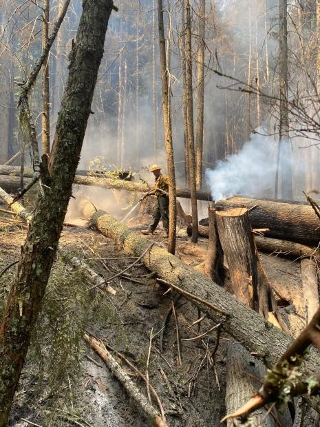 Firefighter using hose to put water on smoldering fuels in a forested area with heavy down timber