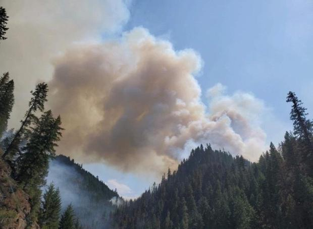 Stateline Fire on July 29, 2021 at 2000 in Bear Canyon with view of dead trees above DP15