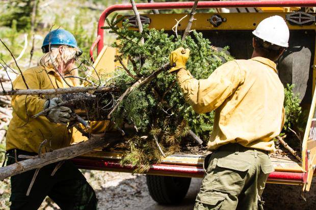 The Zephyr Fire Crew from Tahoe Douglas Fire Protection District in Nevada uses a wood chipper to mitigate the impact of the work done to suppress the Nethker Fire.