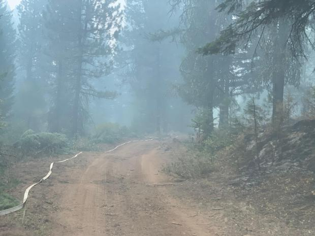 Smoke in the timber, road running down the middle with a hose along side of the road