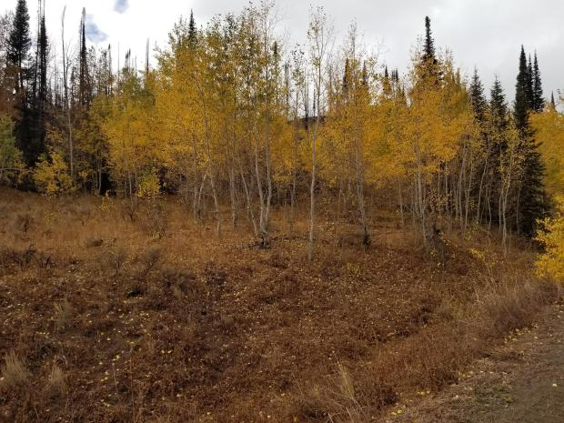 Trees changing color on a hill side