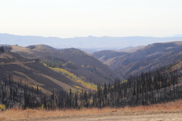 Forested area burned