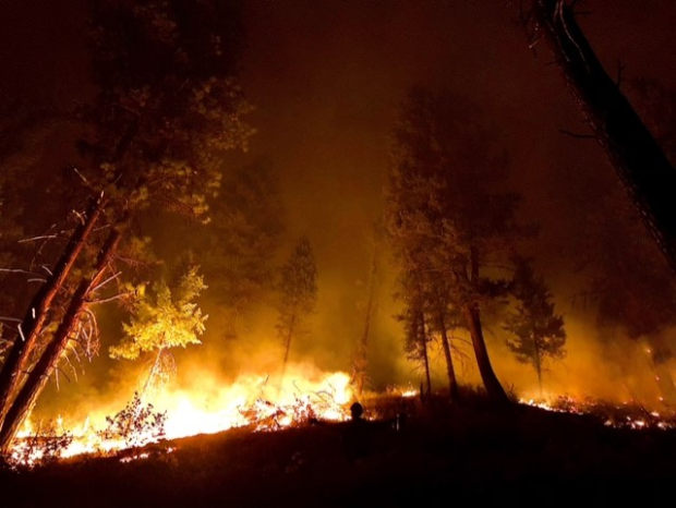 Fire burning in trees at night