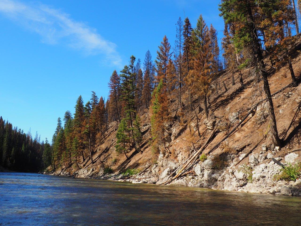 Effects of the Snow Creek Fire as seen looking north, downstream on the South Fork of the Flathead River. The burn area pictured is in the Helen Creek drainage. Photo by Fischer Gangemi.