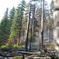 Smoke drifts from beneath pine trees  along Hay Creek Road. The road was used to prevent the fire from growing.