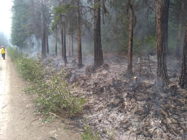 Smoke rises from the pine needles and duff on the forest floor.