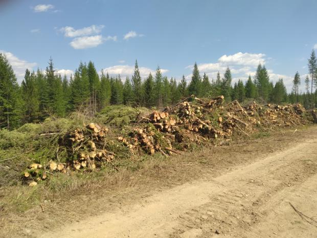A pile of logs are stacked along the side of a road.