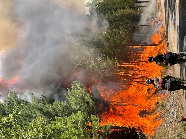 Firefighters work along a dirt road with flames burning in tall timber on one side.